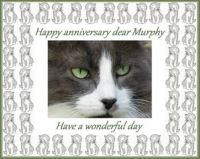 Happy anniversary dear Murphy (LauraJane's cat)