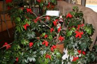 Melville Christmas Tree