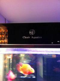 clear aquatics