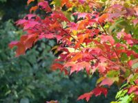The Fiery Reds of Autumn