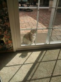 Kitty wants in
