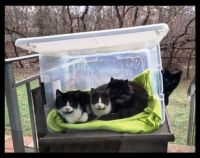 Cats I Know - The Outsiders - Feral Cats