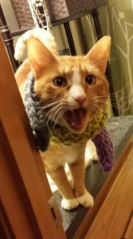 I have my scarf on. Are you ready