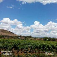 #WeinPuzzle - Sula vineyards (4)