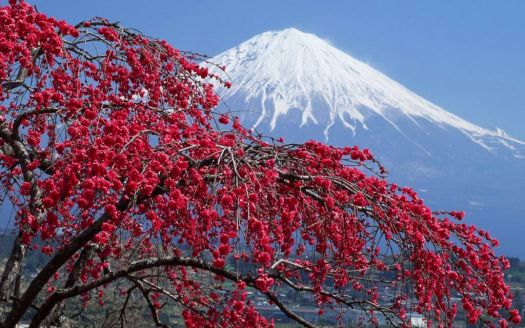 Amazing Mountain-Fuji