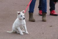 Series Dogs in the Park.  Some photo's of Cora, 3 months old, White Shepard