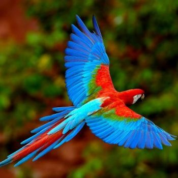 Wild for Wildlife and Nature - Scarlet Macaw