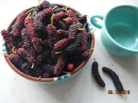 Pakistani mulberries