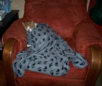 Rusty under blanket