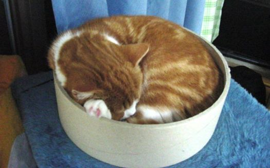Theme: Round Things - Bowls and Bowls Full of Cat