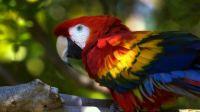 cute-macaw
