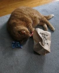 Opening the catnip bag