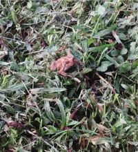 Little tiny froggy!