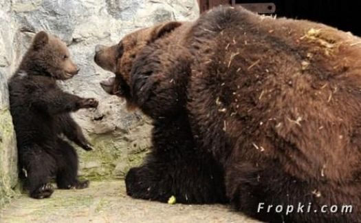 A Baby Bear made his Mother angry....