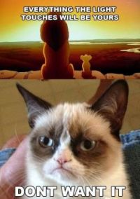 Angry Lion King Cat