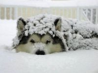 Dog Days of Winter