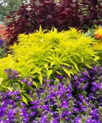 Colour in the flowerbed