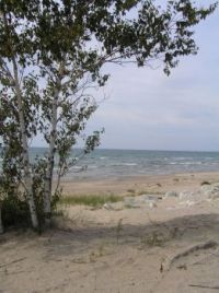 Birch on Lake Mich. in UP