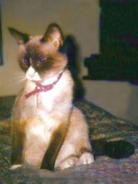 oona 1995
