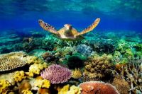 It's World Reef Awareness Day