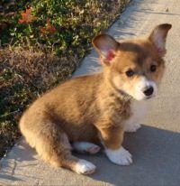 Stan as a puppy