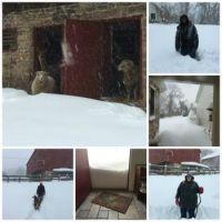 Big Snow 2016
