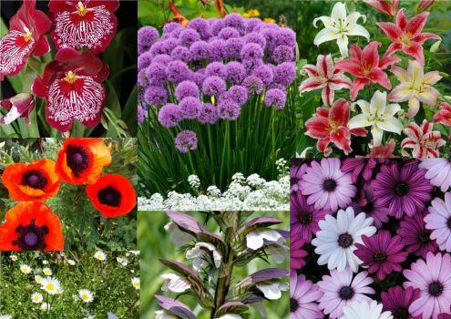 Flowers O