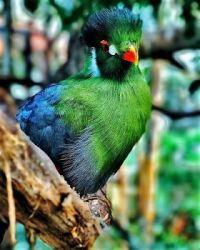 AN UNKNOWN BIRD - 1 OF 4