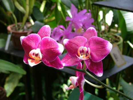 Selby Gardens Orchids