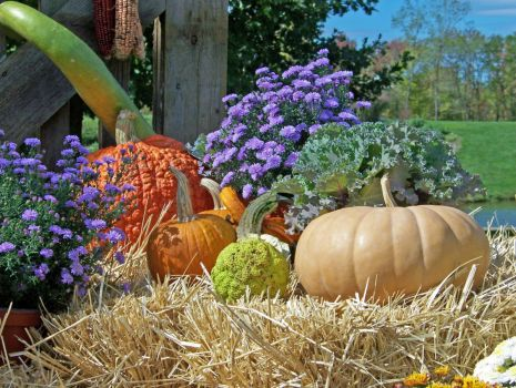 Pumpkins by David Wagner