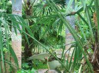 Heronswood (botanical garden)