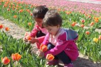 Tulip and for kids