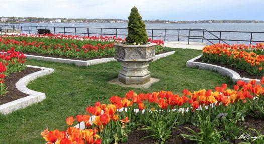 Gloucester Tulip Garden_6874