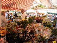 trh v Nizze