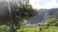 071 Sao Pedro-Madeira