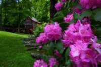 Spring-WV-Gristmill-Flowers