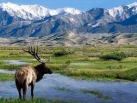 Elk at Big Spring Creek
