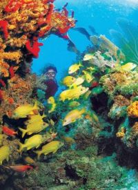 Coral Reef- Florida Keys