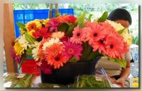 Gerberas For Davitai