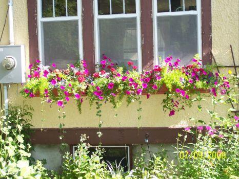 window boxes- 2008