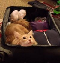 Pretty please, bring me on your trip!