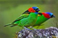 Beautiful  Birds - No 33