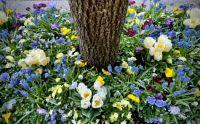 Flowers, NYC