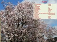 Birthday Calendar April