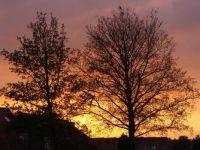 evening from my window