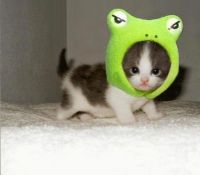 frog kitty