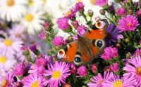 Butterfly on a bunch of flowers.....