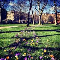 SPRING COMES TO LONDON