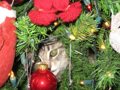 Christmas Ornament