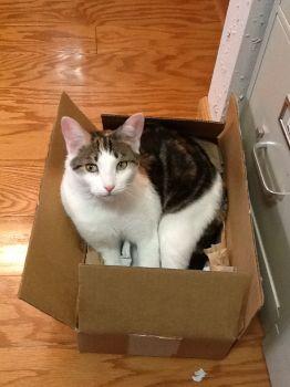 Comfy in a box